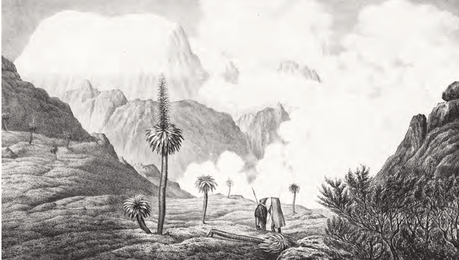"""Vegetation below the snow line at Mt. Selki in the Semien Province."" This drawing was made by F. C. Vogel after a sketch by Rüppell himself. See the work by Ib Friis, ""Travelling Among Fellow Christians (1768-1833): James Bruce, Henry Salt and Eduard Rüppell in Abyssinia,"" pages 161-194 in Scientia Danica, Series H, Humanistica (2013).****"