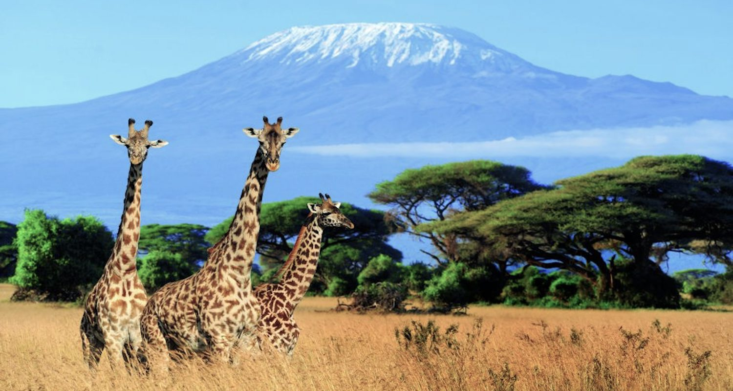 No, I didn't shoot this image of Kilimanjaro and the giraffes. It is quite lovely. It came from here:    https://www.marieclaire.co.uk/life/travel/mount-kilimanjaro-africa-612741