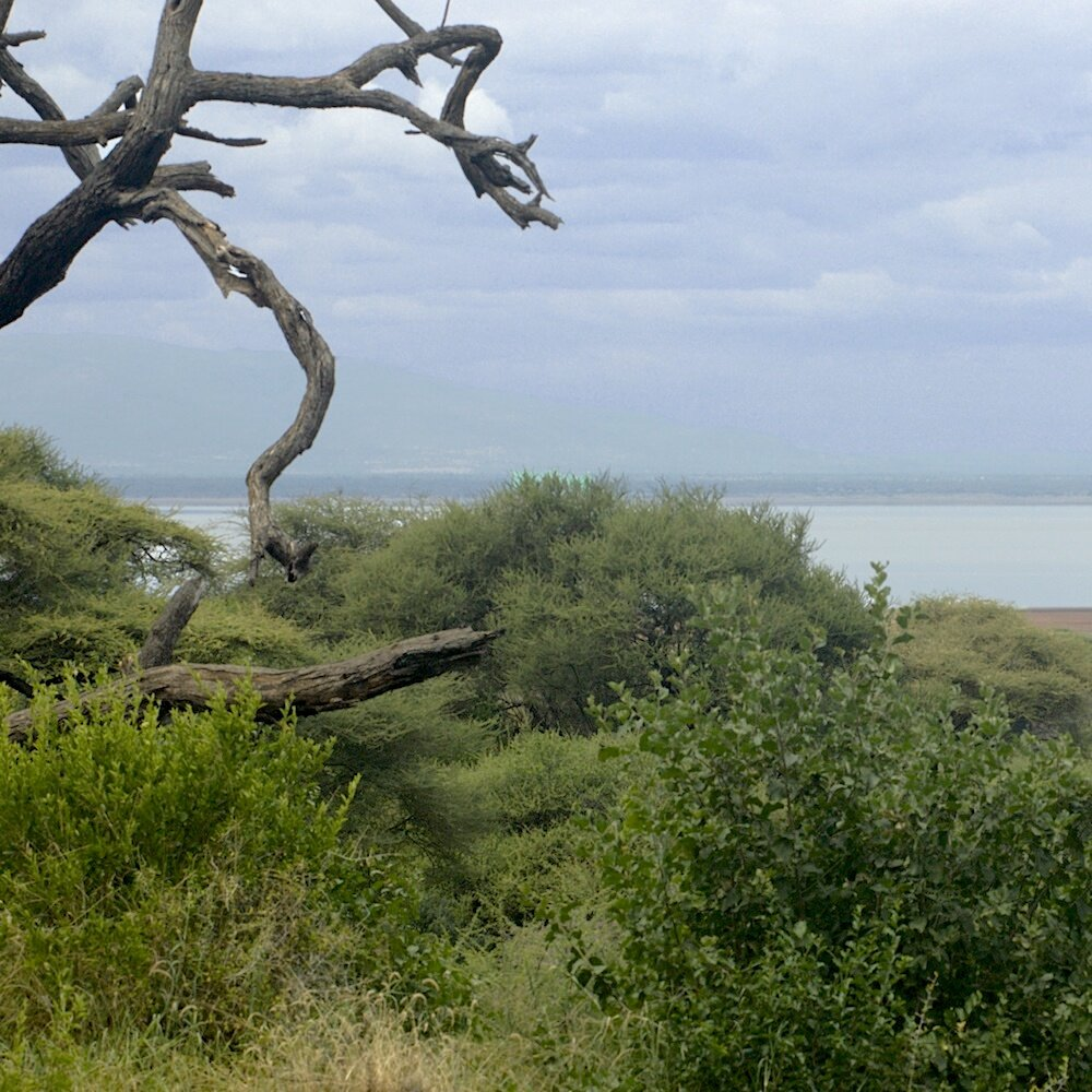 Lake Manyara copy.jpg