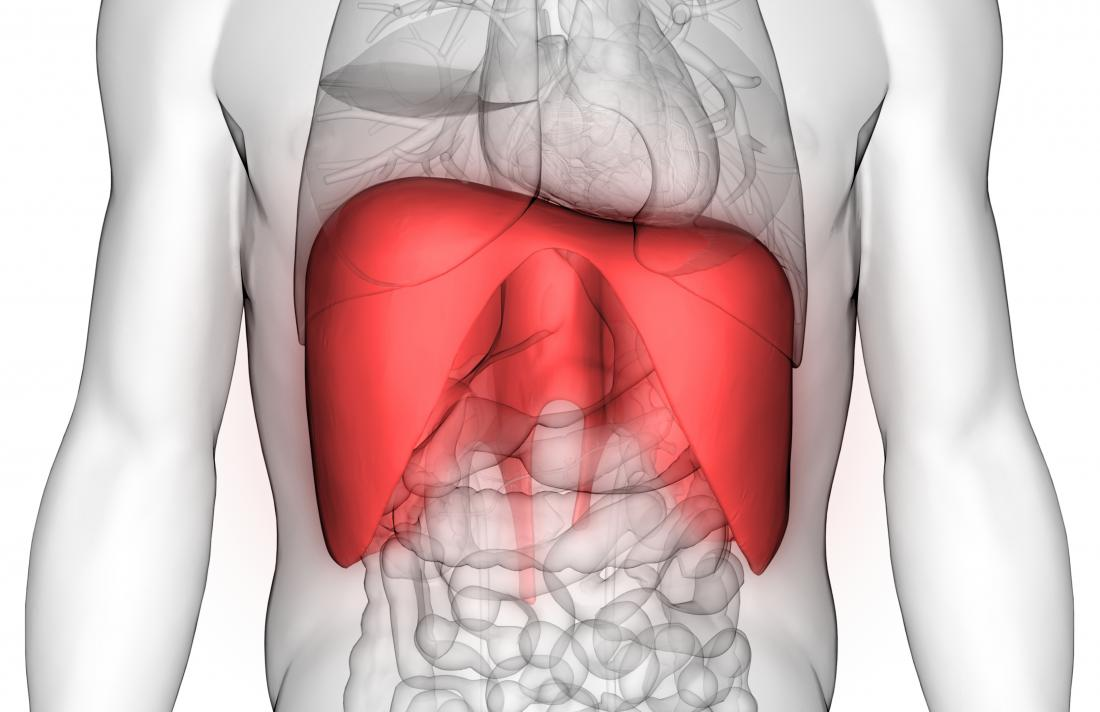 The heart sits on top of the diaphragm, while the liver is tucked under the diaphragm on the right side under the rib cage.