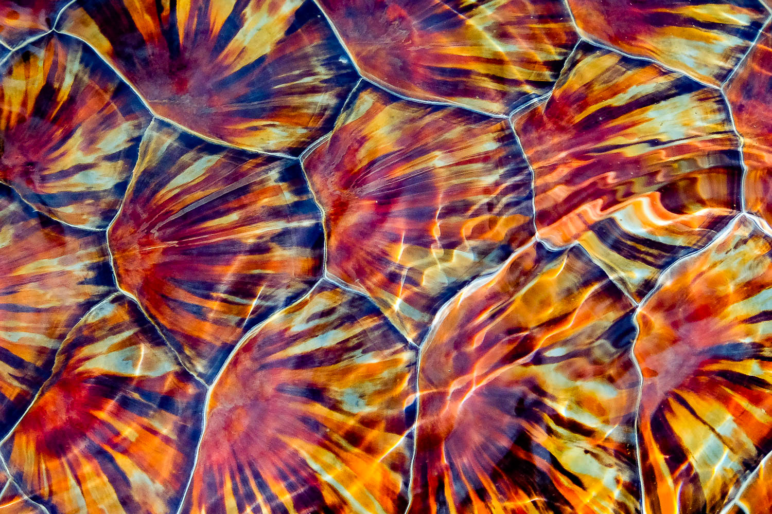 A close up of a sea turtle shell.
