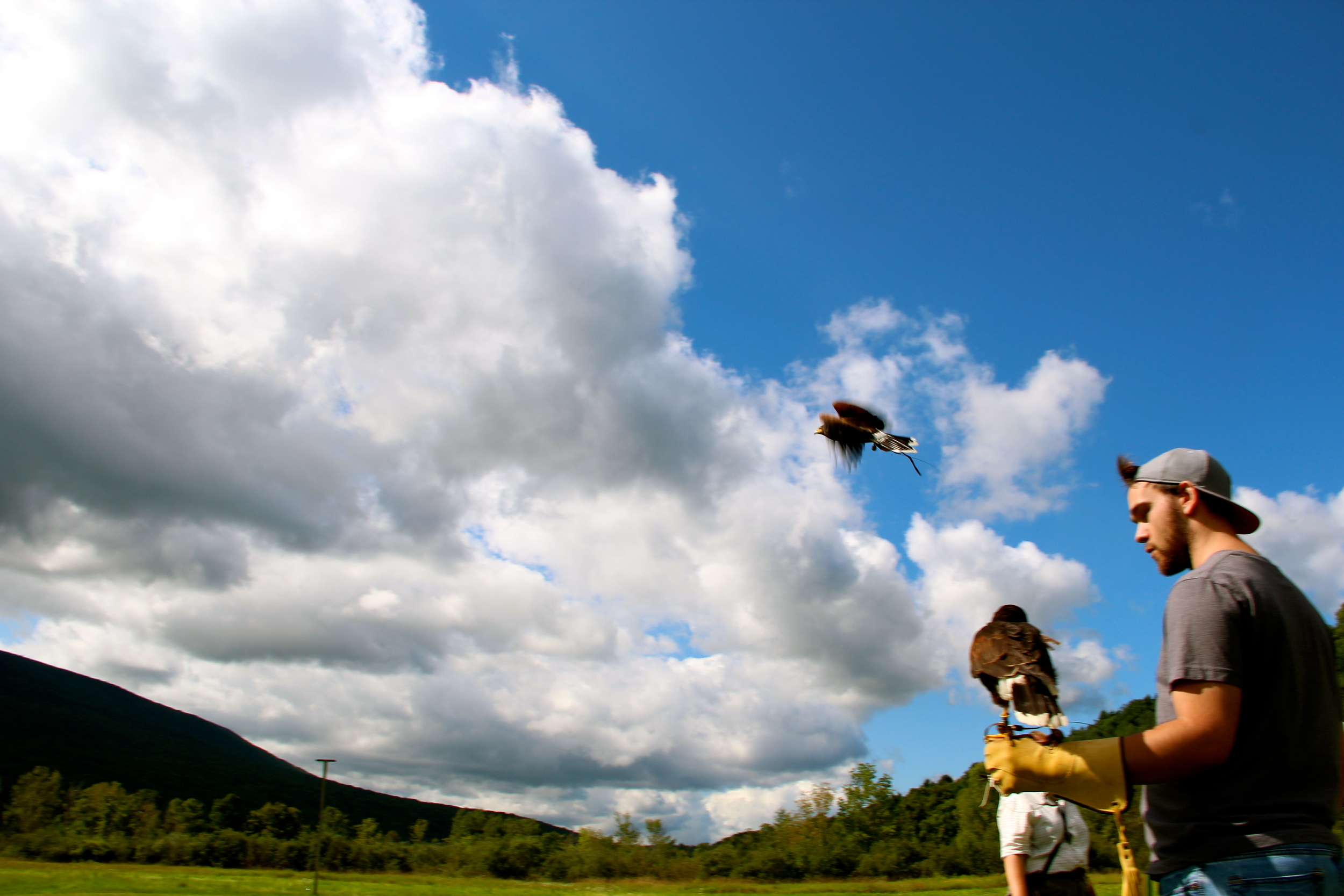 Falconry lessons