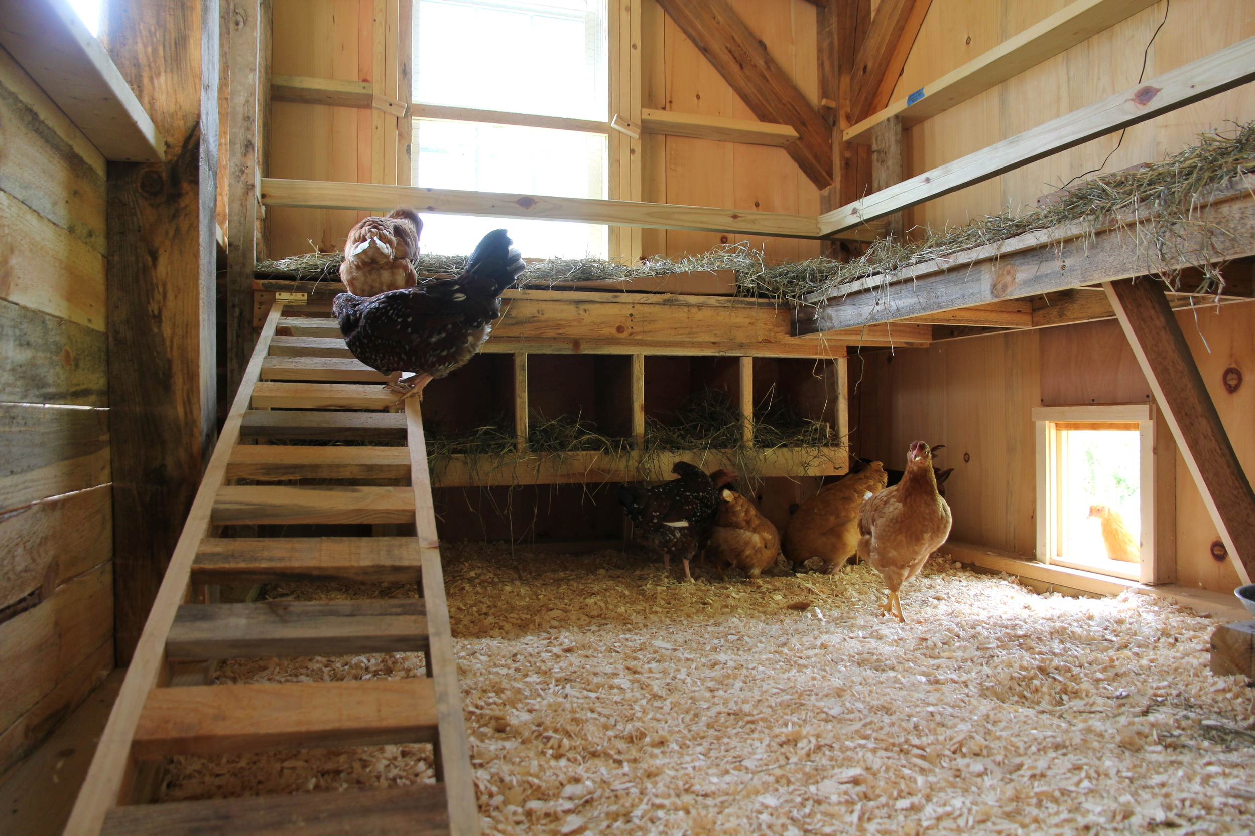 Our chicken door is installed in the new coop in our barn. It looks great and works great.  Sue Gilbert
