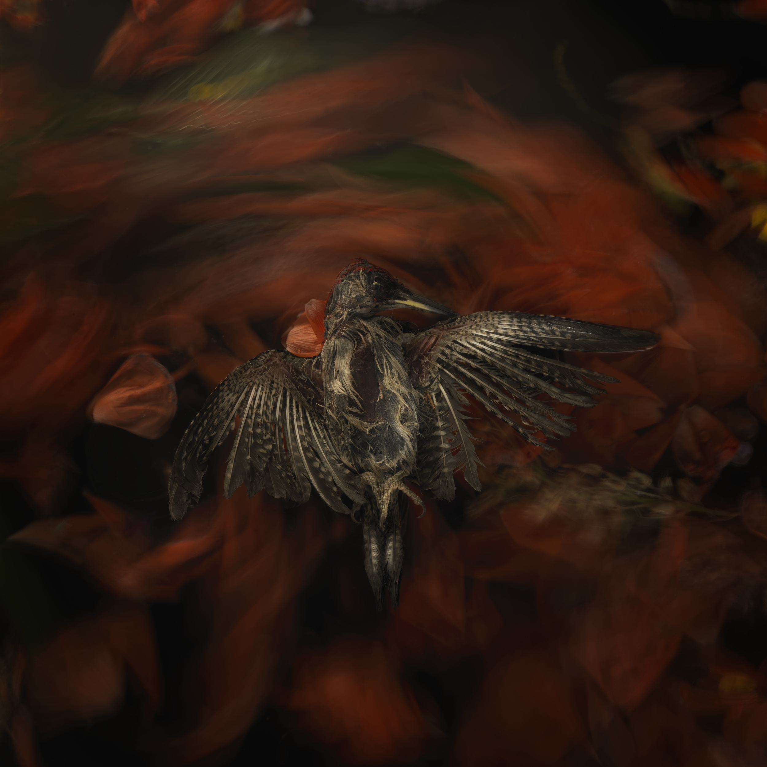 Bird #8
