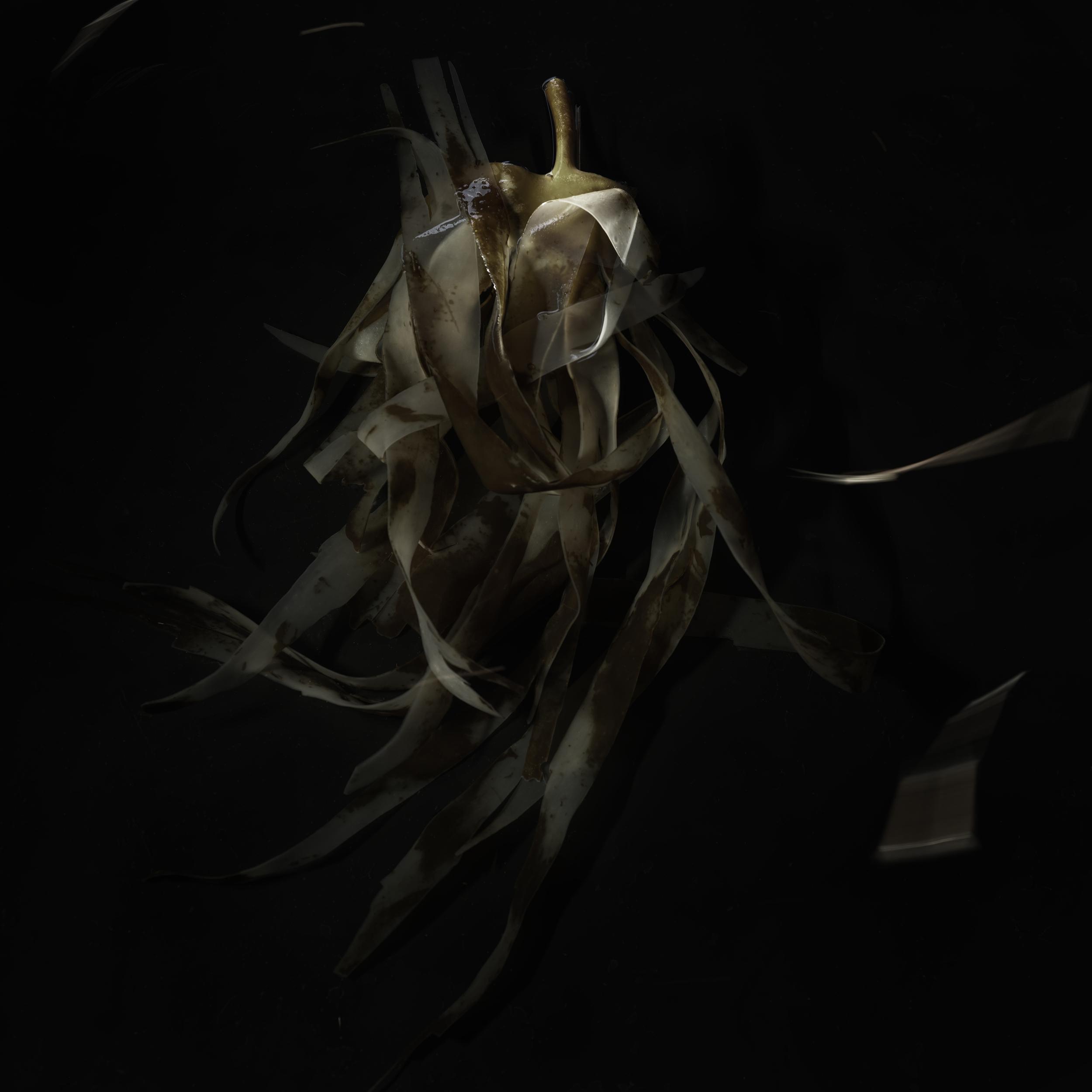 Seaweed #6