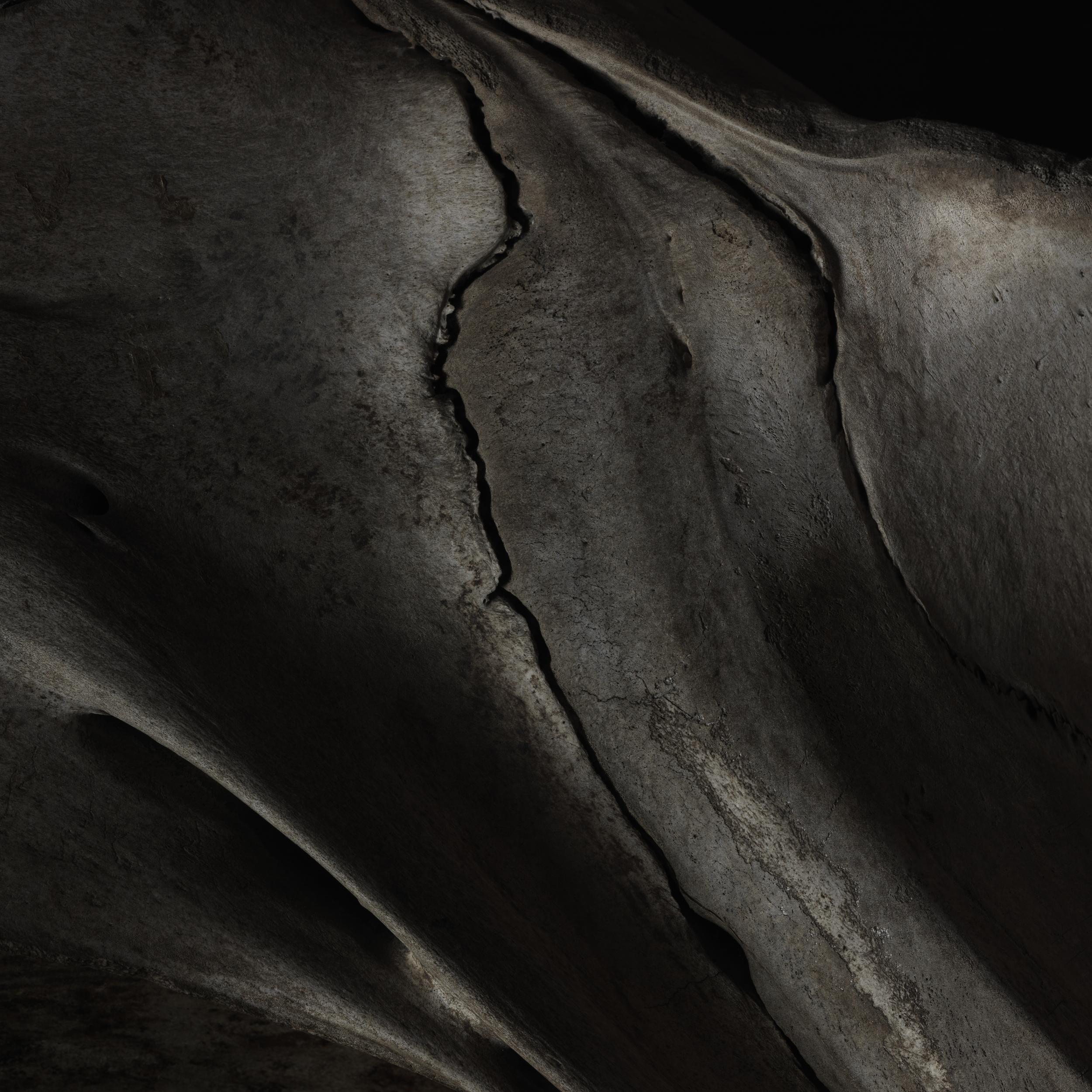 Whale bone #1