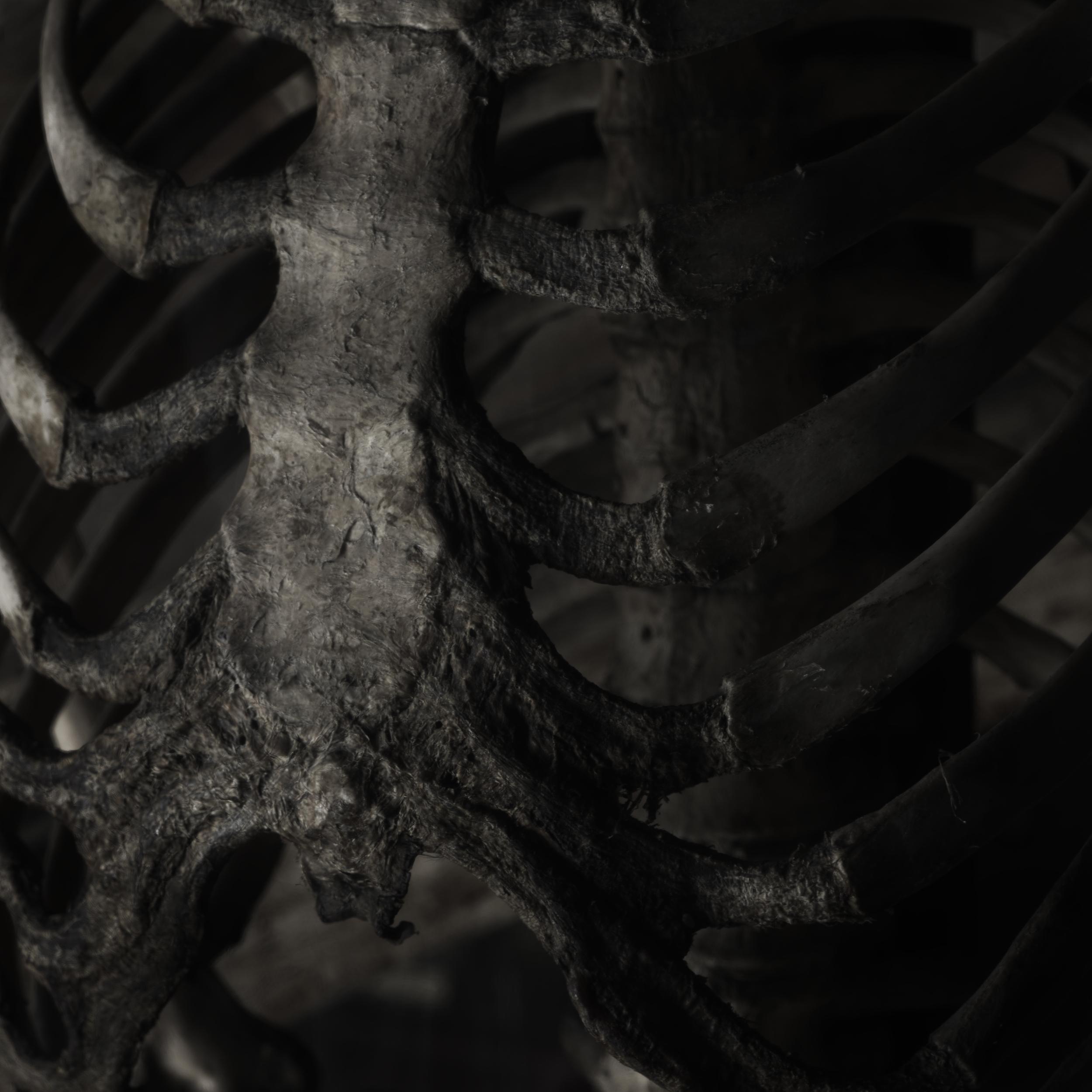 Human bone #1