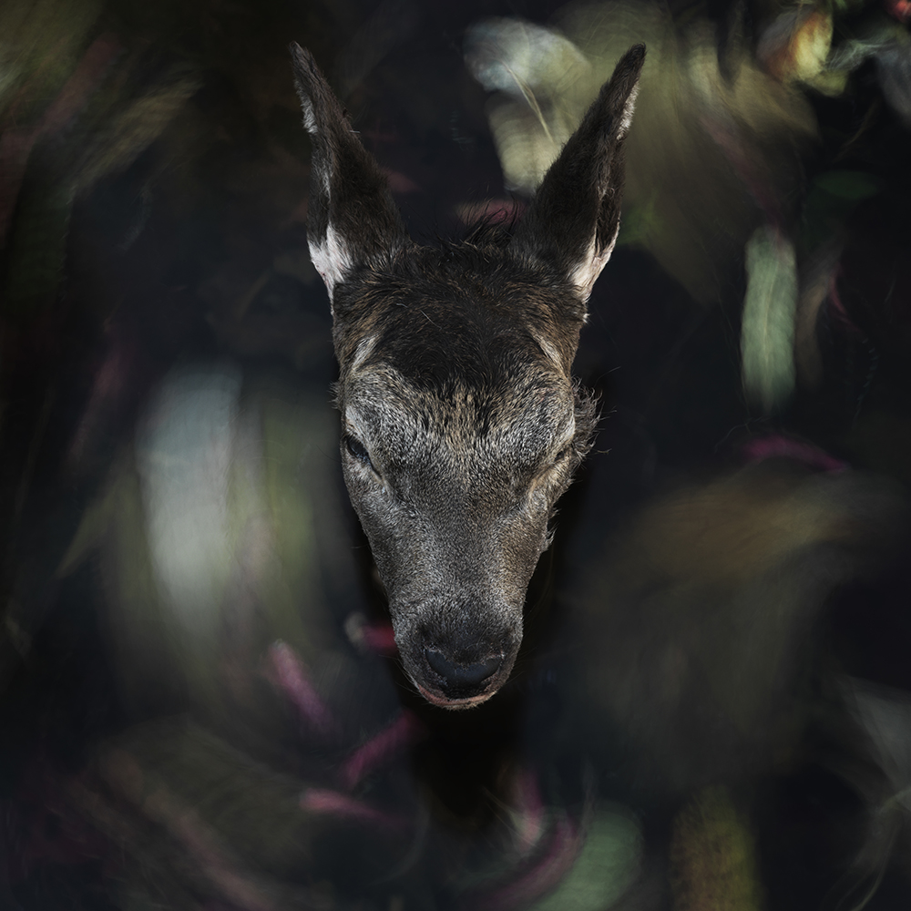 The Deer #4