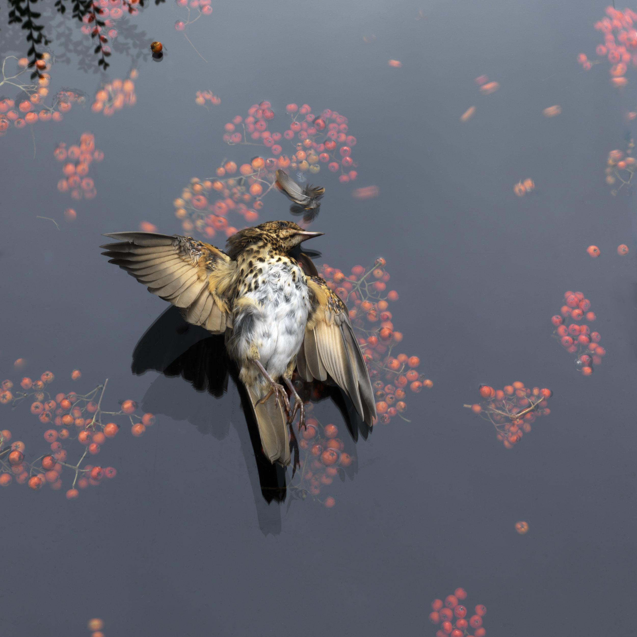Gesturing Bird