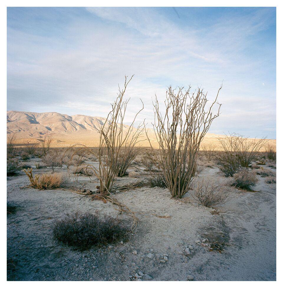 desert 013.jpg