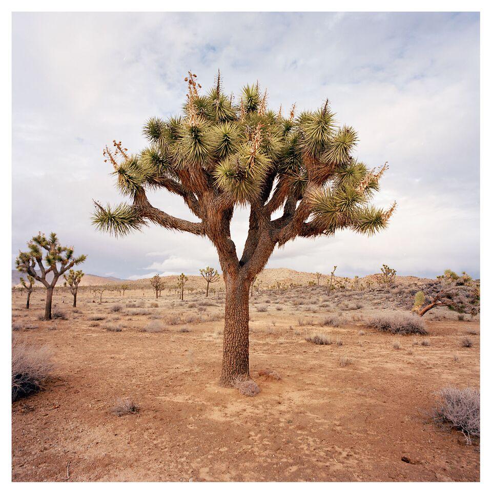 Desert 029.jpg