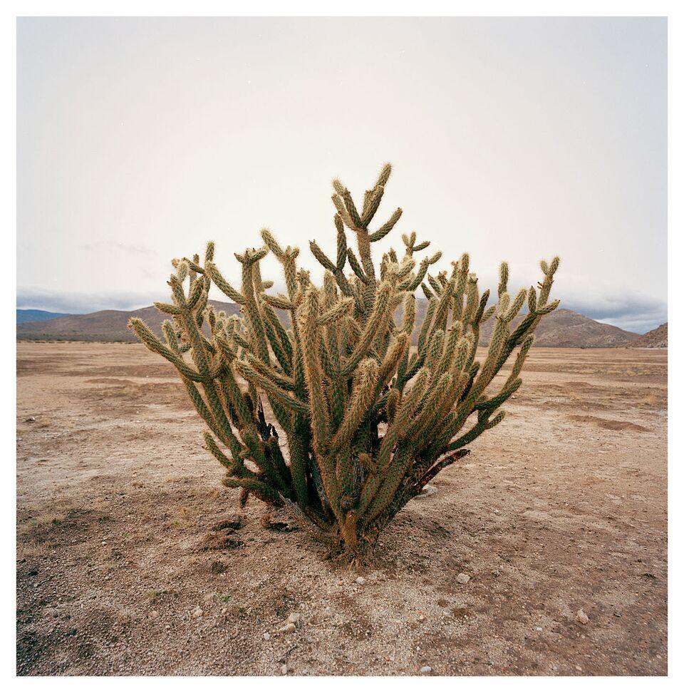 Desert 011.jpg