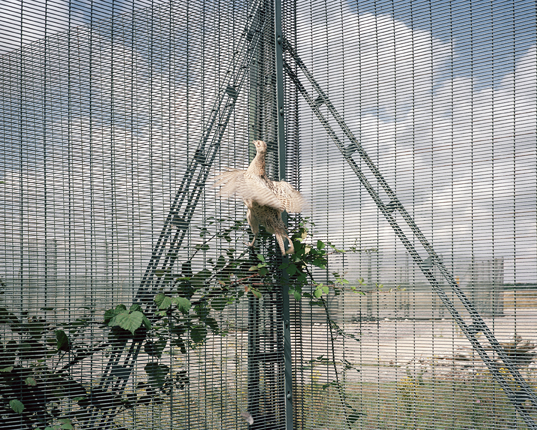 1 Untitled from Cold War Pastoral 1999-2000