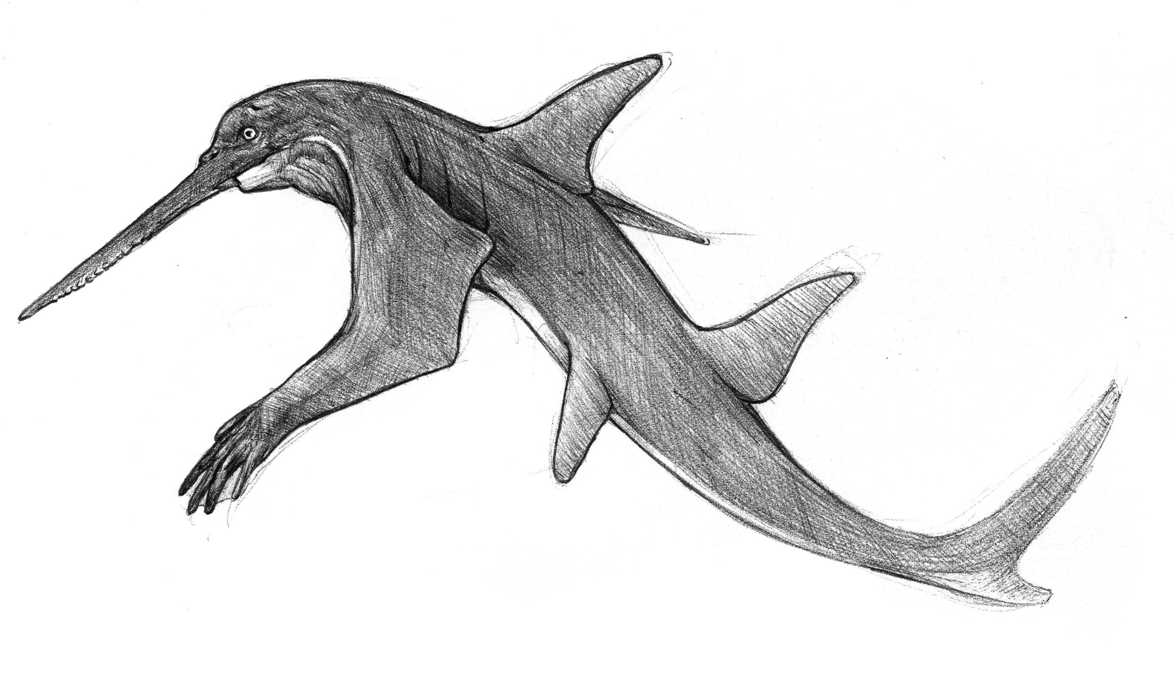 Carpenter Shark