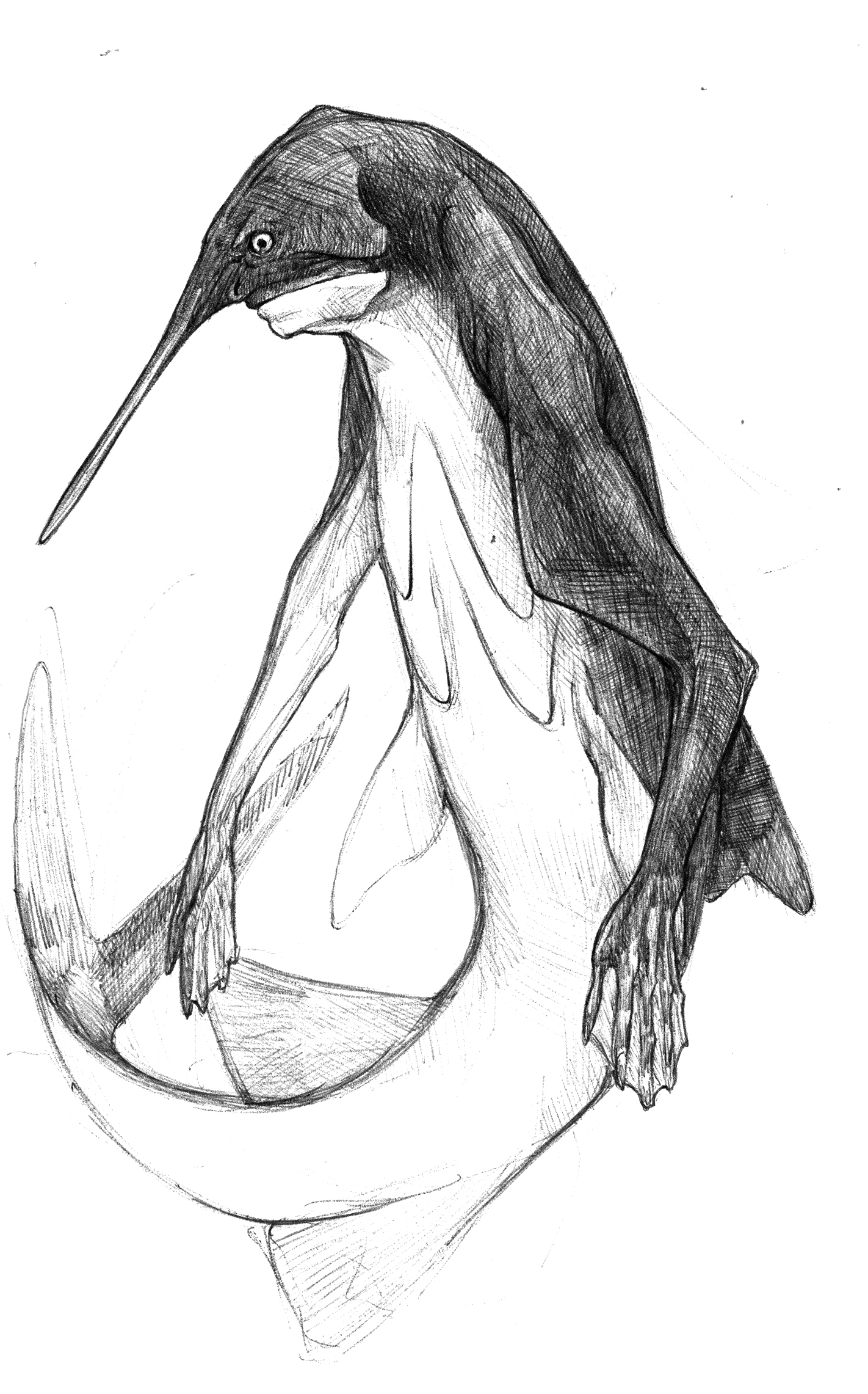 Paddlefish.jpg