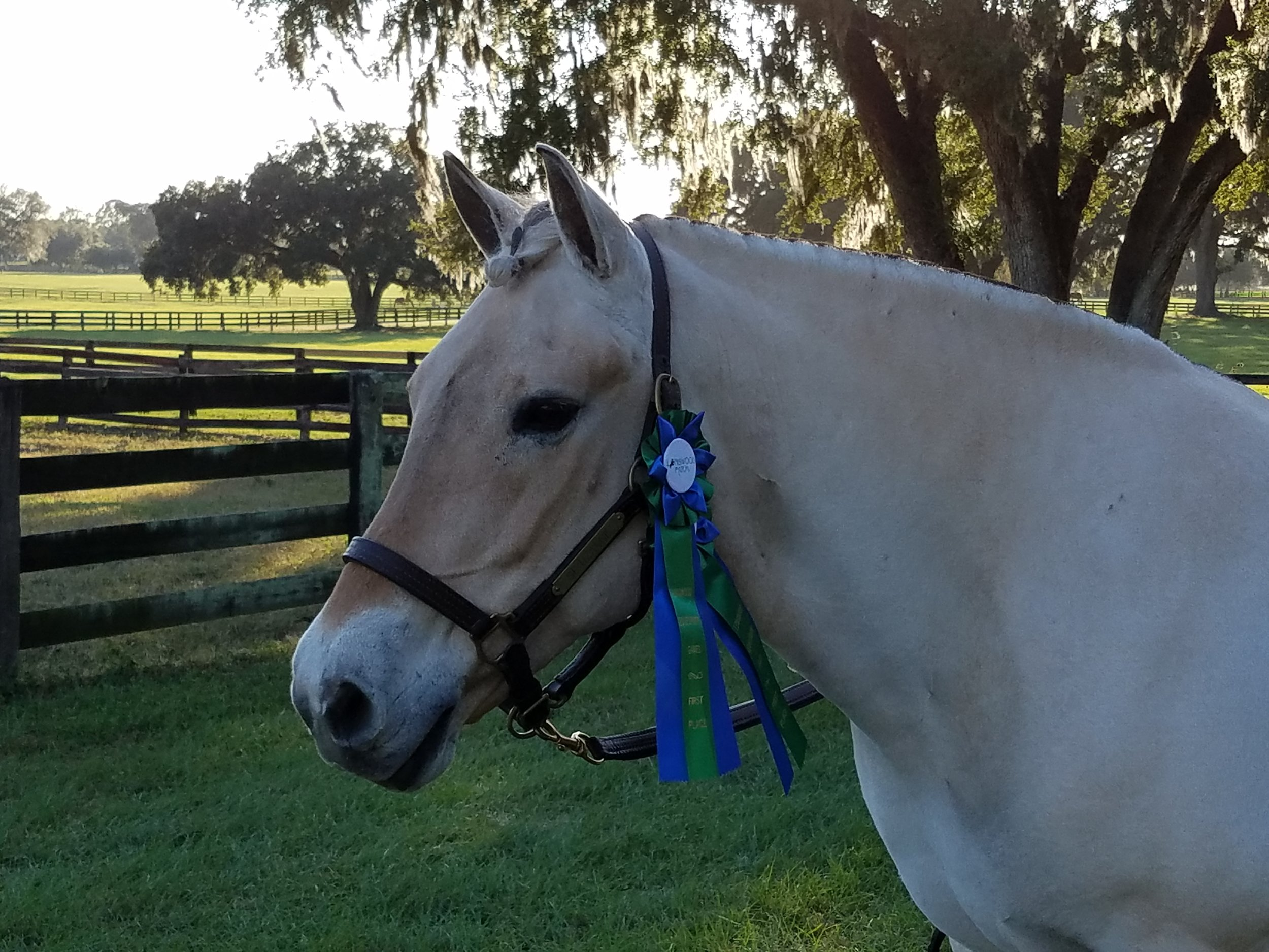 Uzanne showing off her shiny blue ribbons.