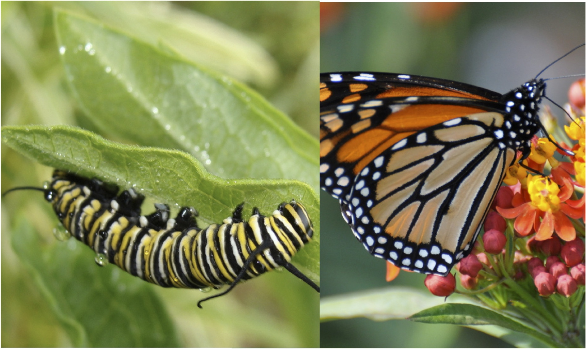 1The Caterpillar The and Climate Butterfly — Healers tshxrdCQB