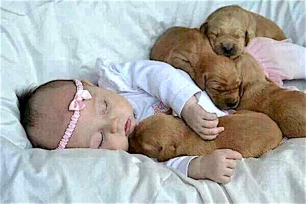 baby cuddling puppies.jpg