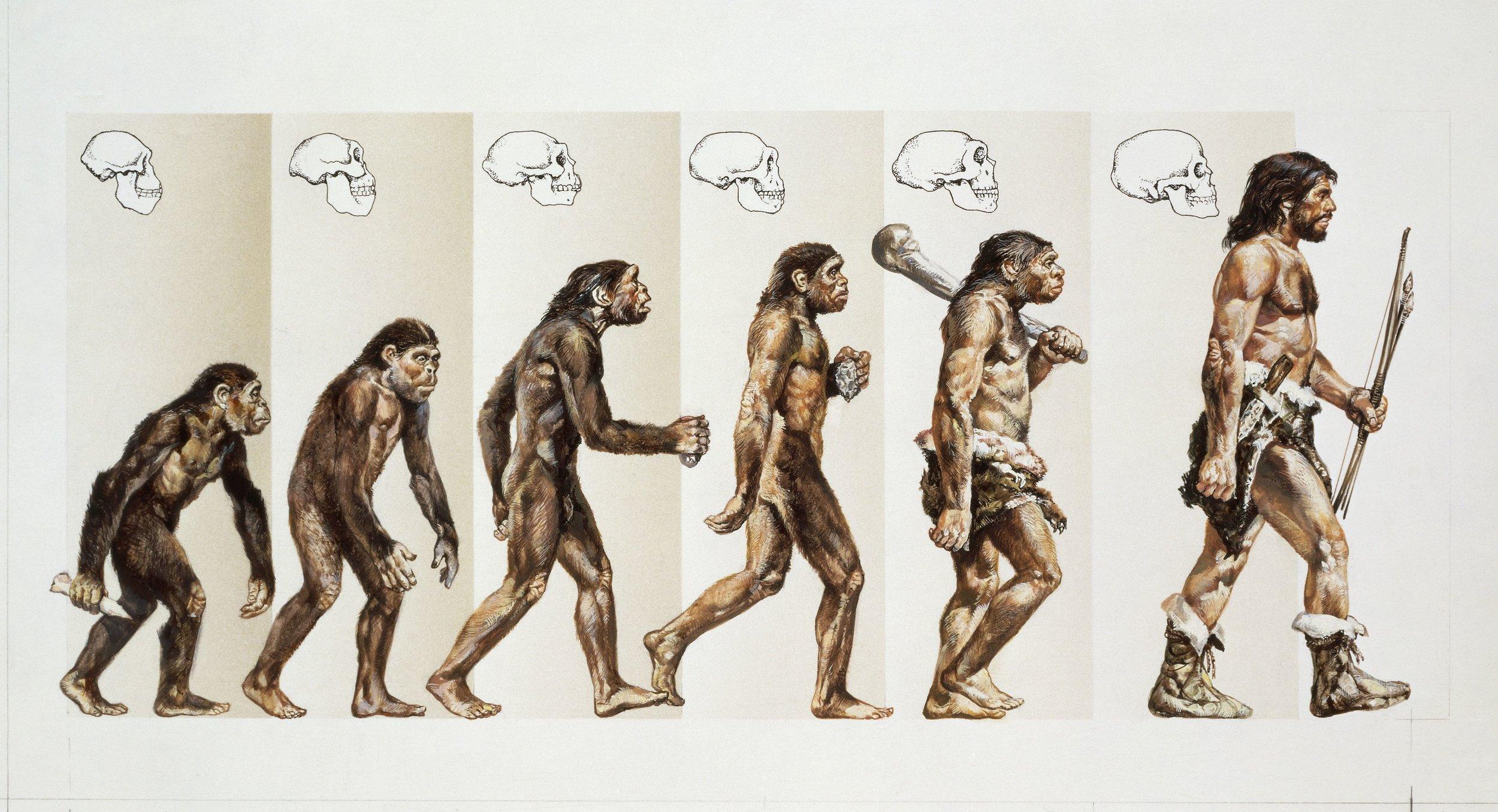 human-evolution-through-time-drawing-117196092-570697b93df78c7d9e99308c.jpg