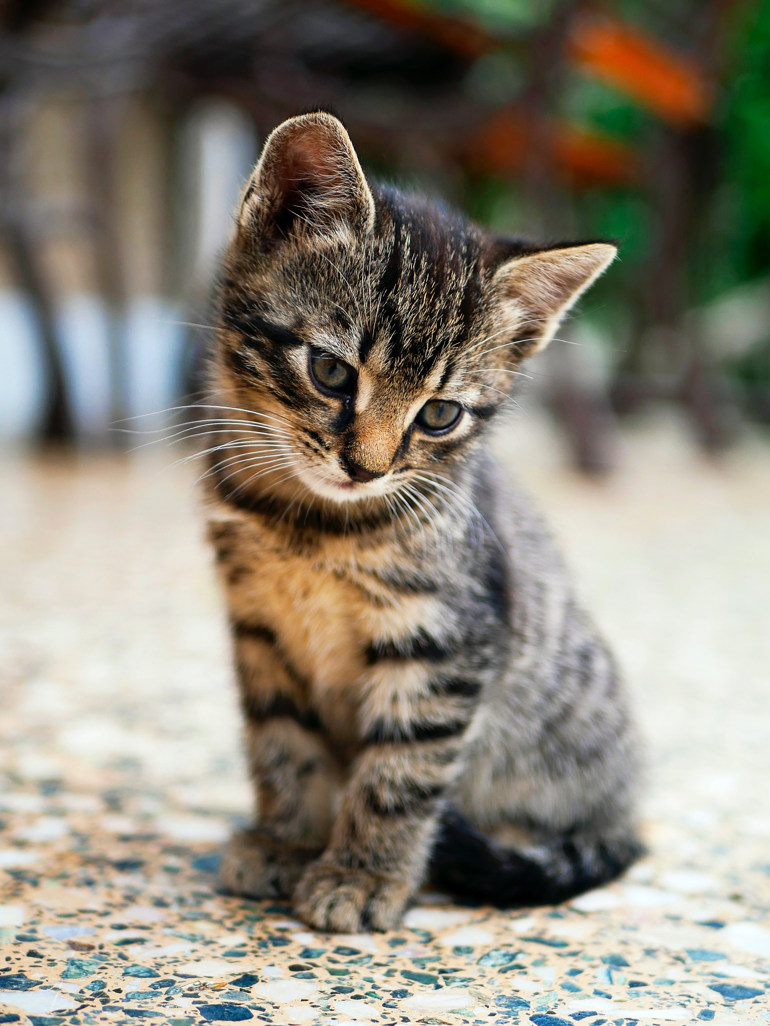 """Think about the approach you'd take with a little stray kitten. You wouldn't yell at it or throw a stick at it, if you wanted it to come to you. Nah, that's a surefire way of getting the kitten to head in the opposite direction. Nah, you speak sweetly to it. """"Here, kittie kittie. I've brought you some milk. Please let me hold you and take care of you."""" You coax it. Pet it. Love it. — LaTisha Cotto"""