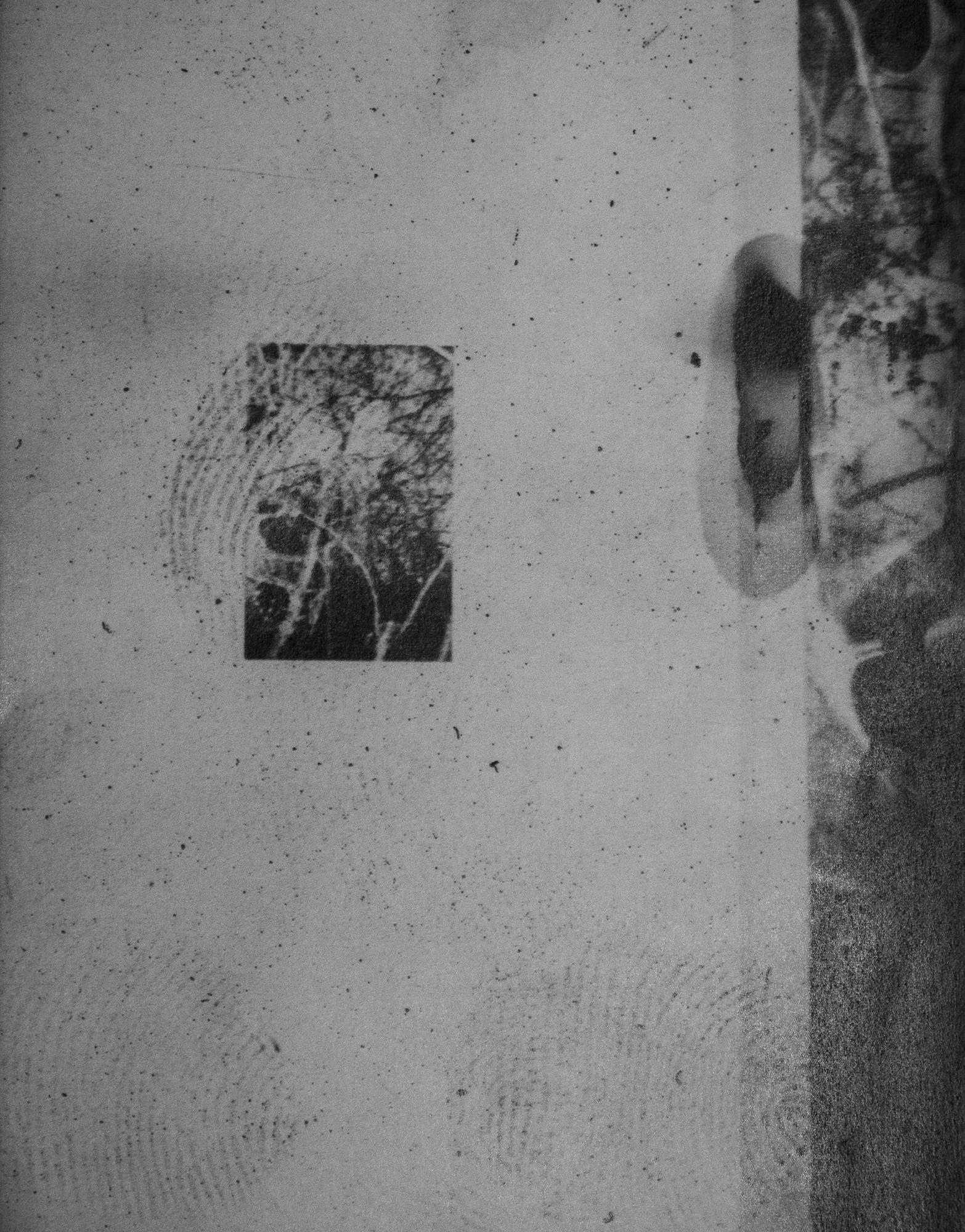where the wild roses grow web-16.jpg