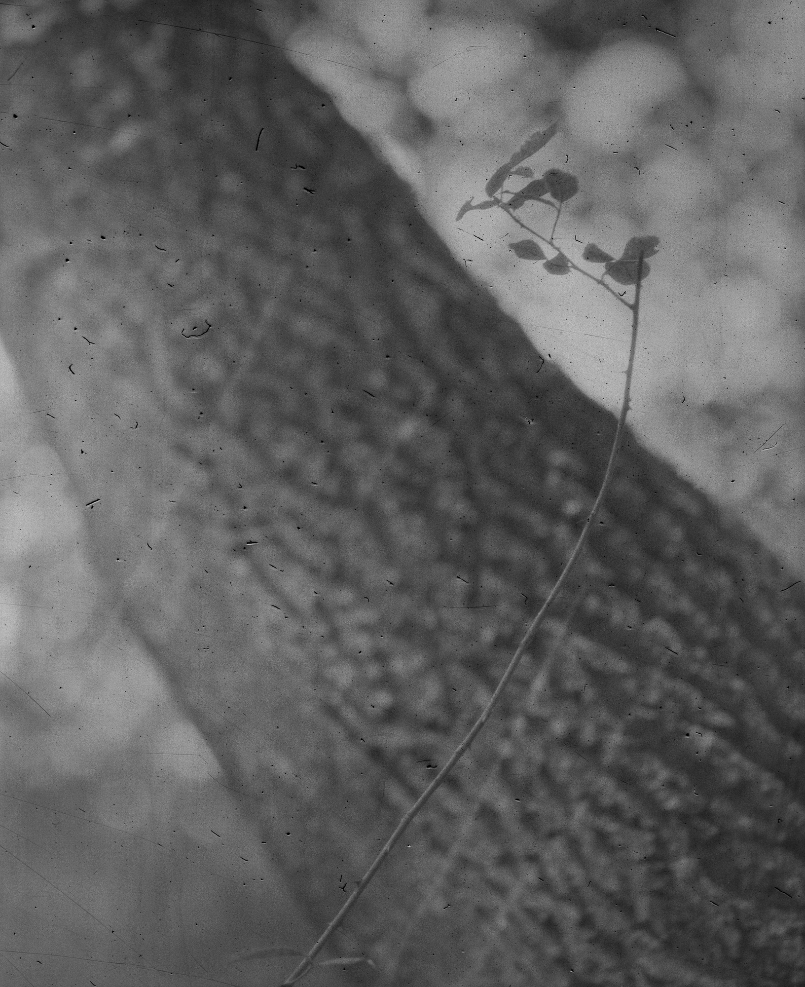 where the wild roses grow web-12.jpg