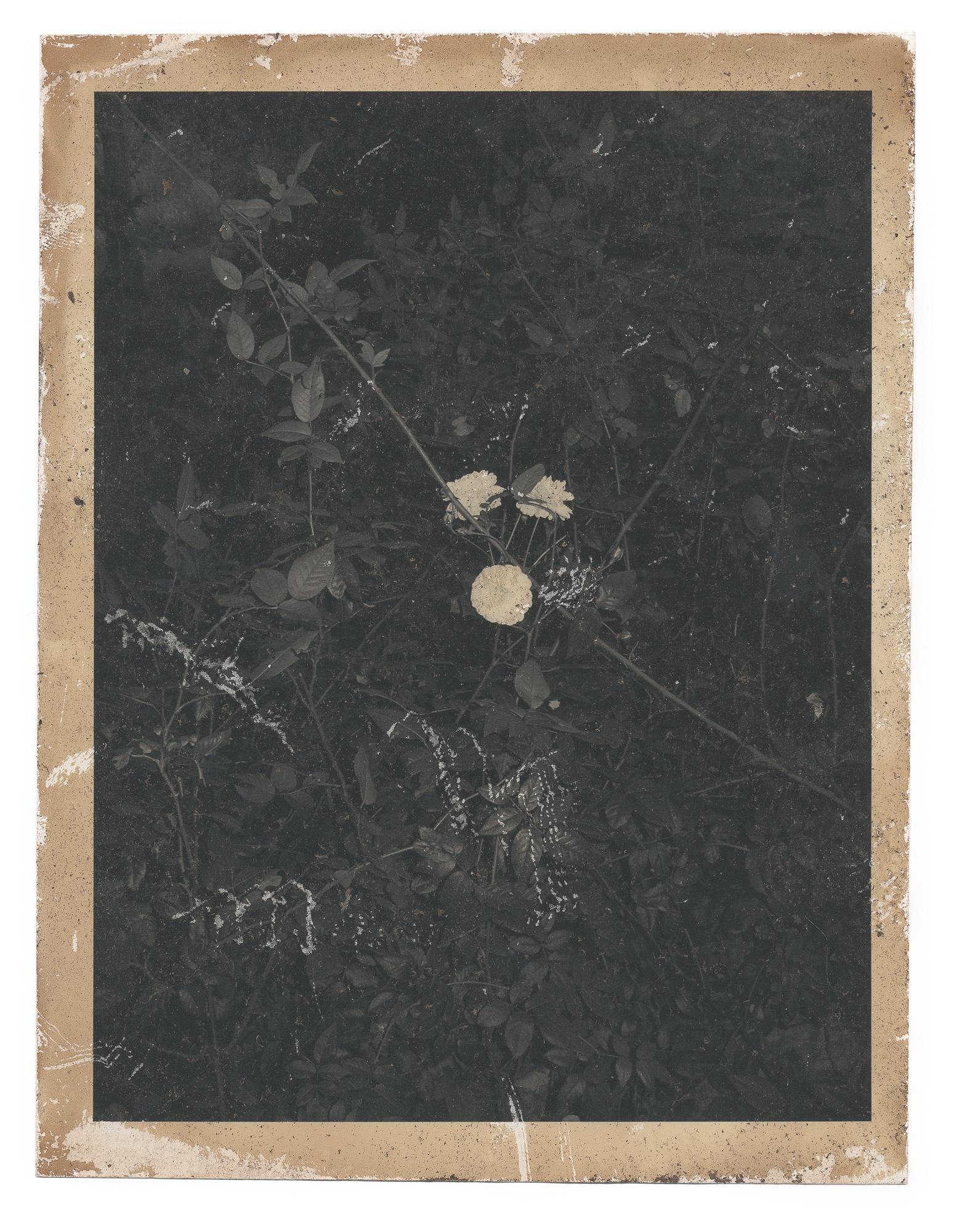 Autumnal Glimpses no.8, 2019  Naturally toned pigment print  187mm x 143mm  Unique print