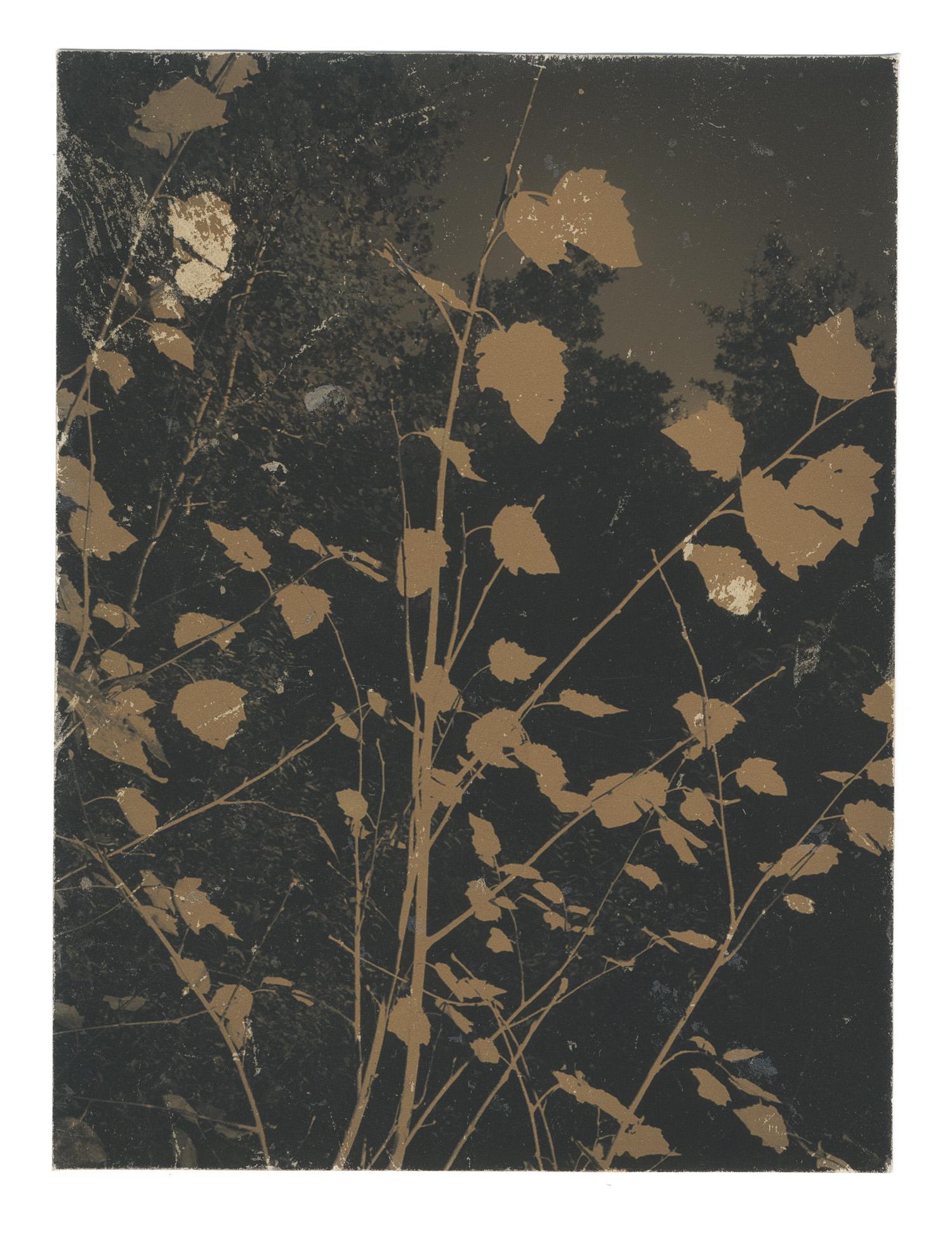 Autumnal Glimpses no.19, 2019  Naturally toned pigment print  120mm x 90mm  Unique print
