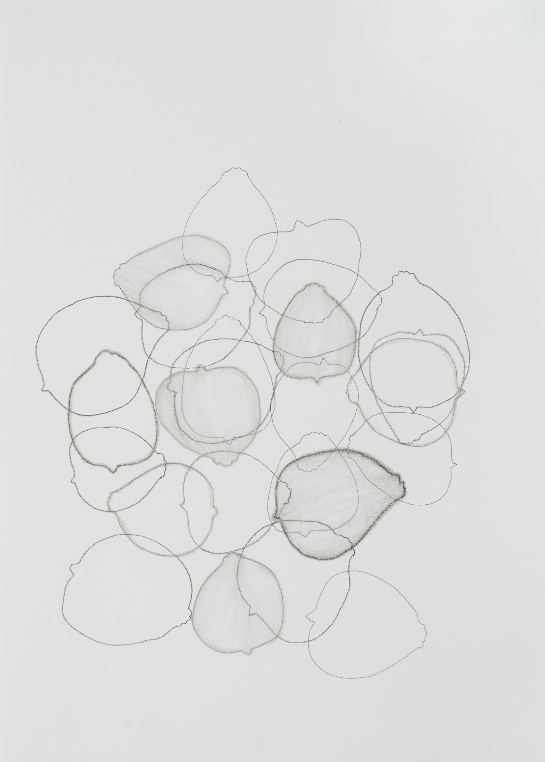 "subtle bodies | lemon (01), 2015 | graphite on paper | 11.5"" x 8.25"" | Private Collection, Oakland, CA"