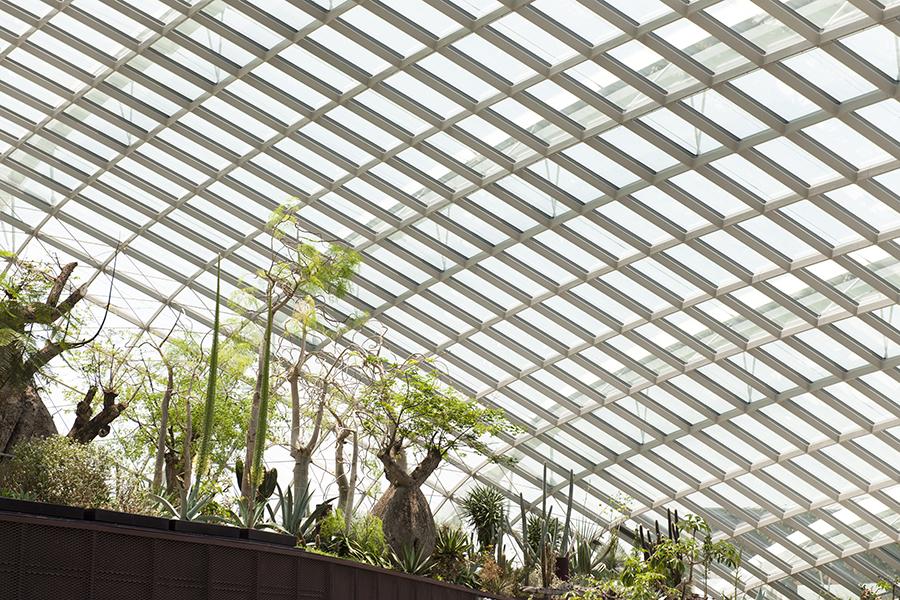 Gardens on Singapore No. 5