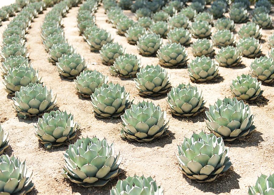 Gardens of Palm Springs No. 1