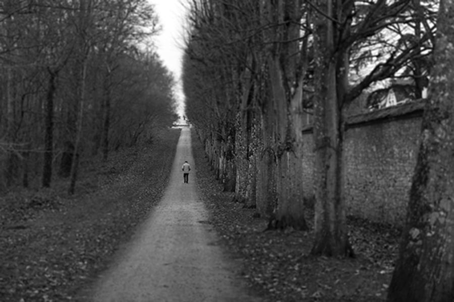 Salon Fontianbleau Forest Man Walking 14 wide x whatever high.jpg