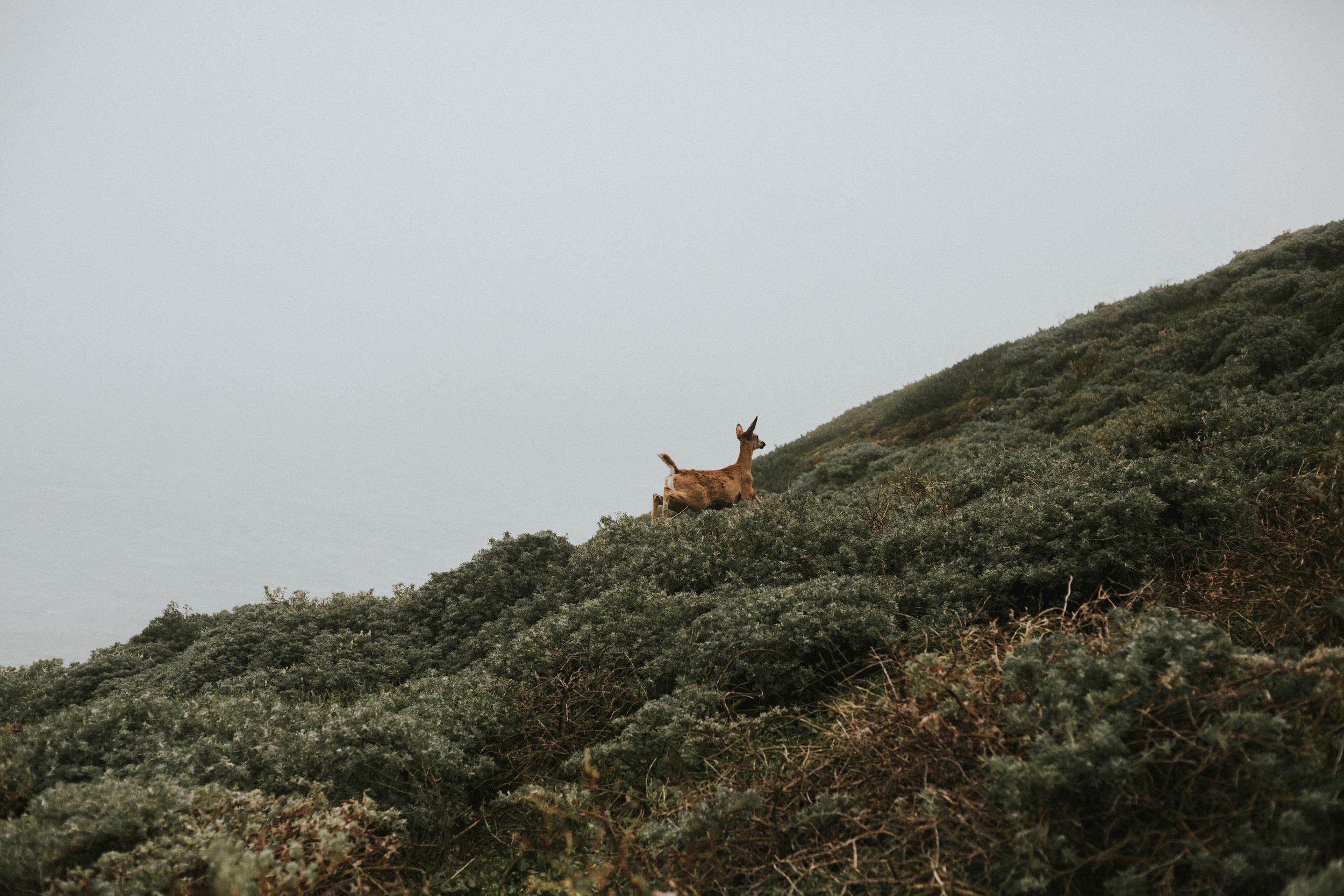 pointreyes-fog-50.jpg