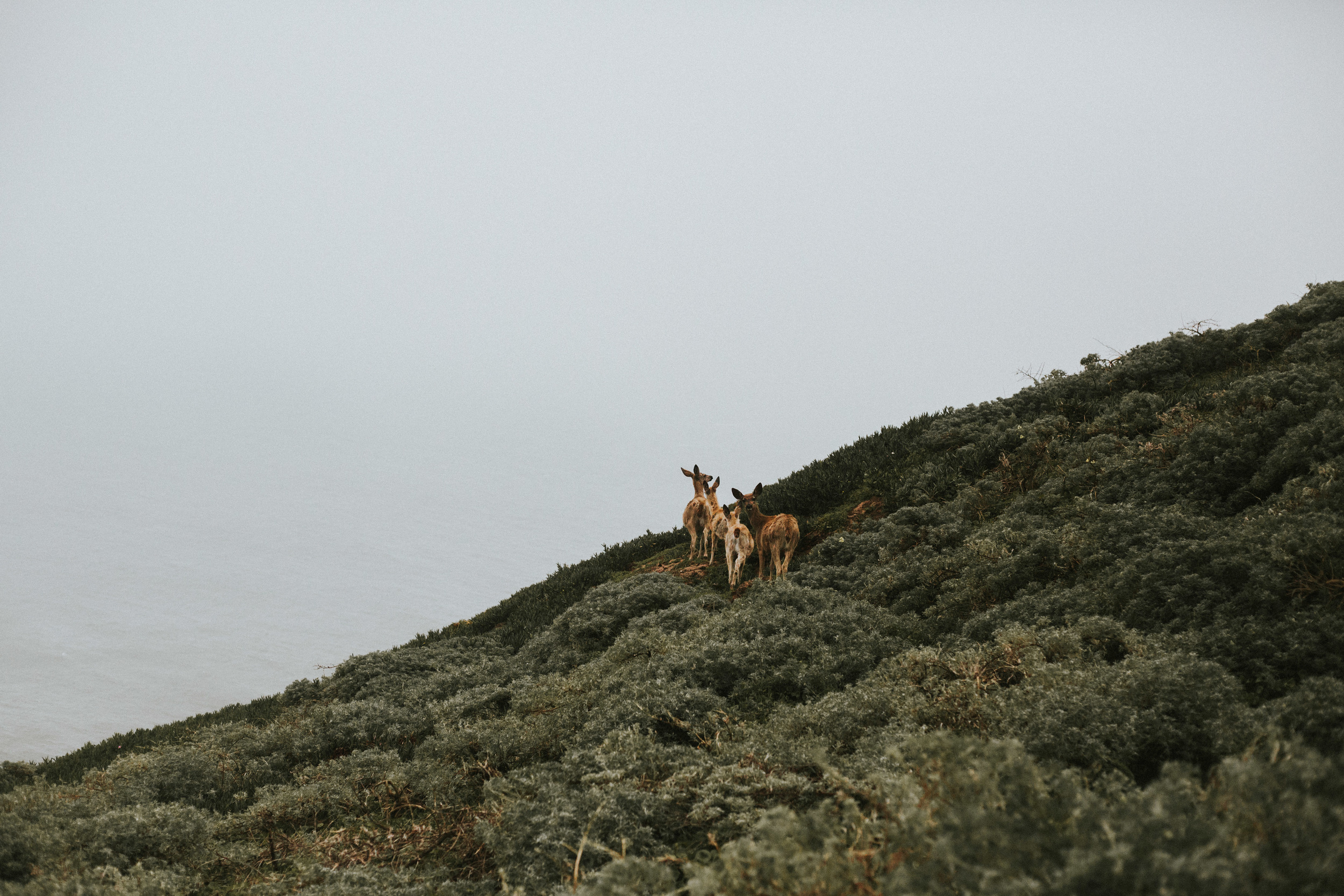 pointreyes-fog-55.jpg