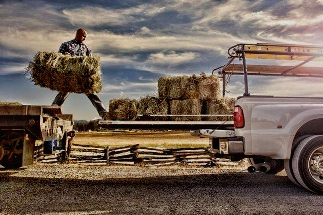 Farm Manager Jesse loading hay