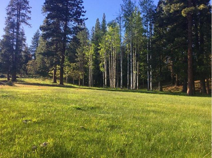 The Aspen Meadow at New Frontier Ranch is peaking with green.  The perfect setting for your event or wedding.