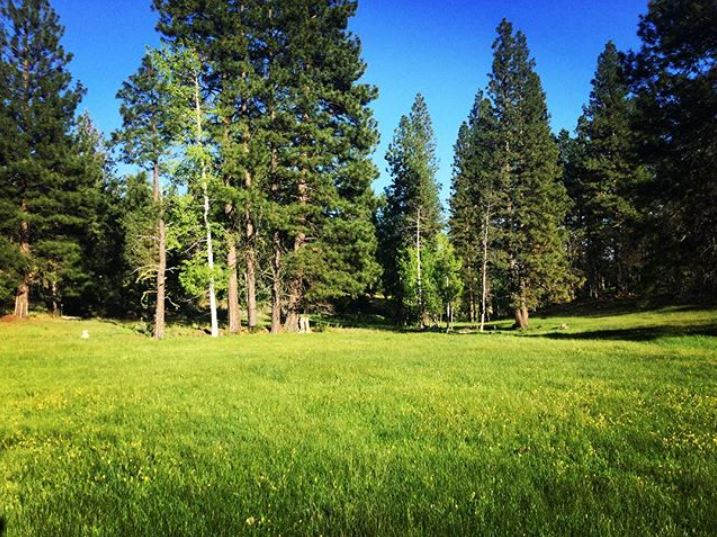 The Aspen Meadow is looking so lush and green. The perfect setting for an outdoor wedding!