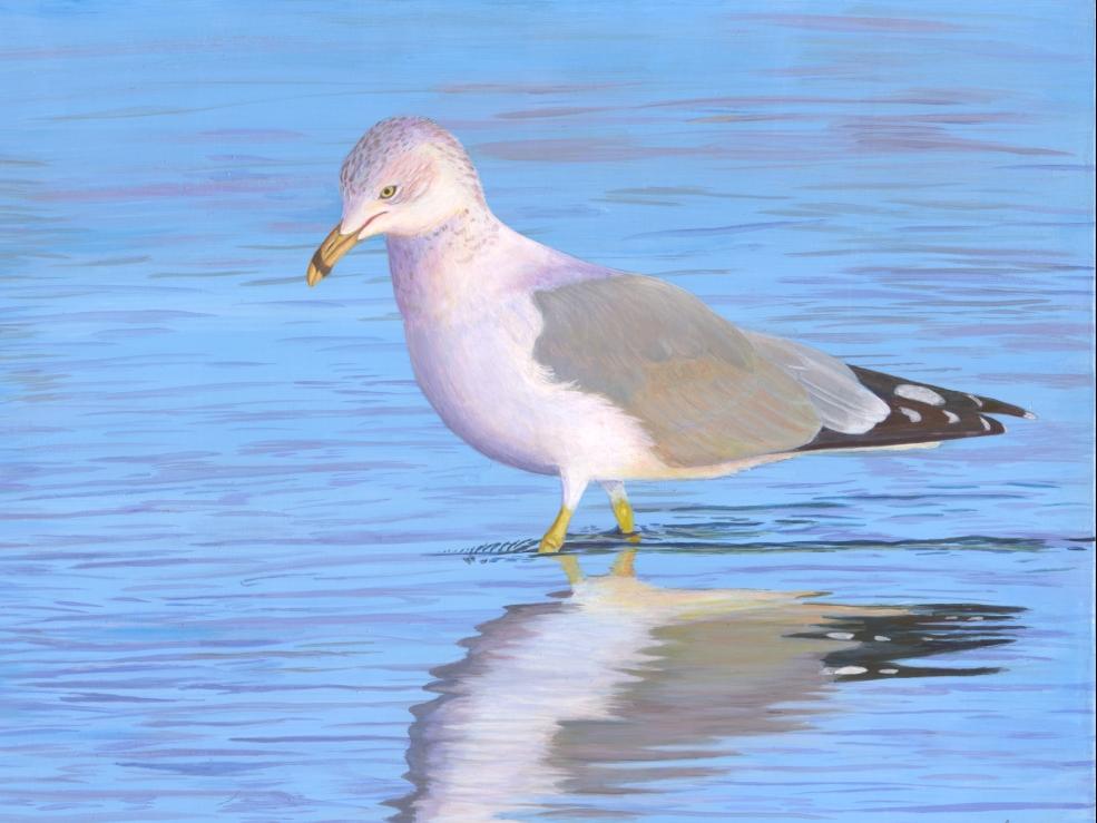 ducklings use copy.jpg