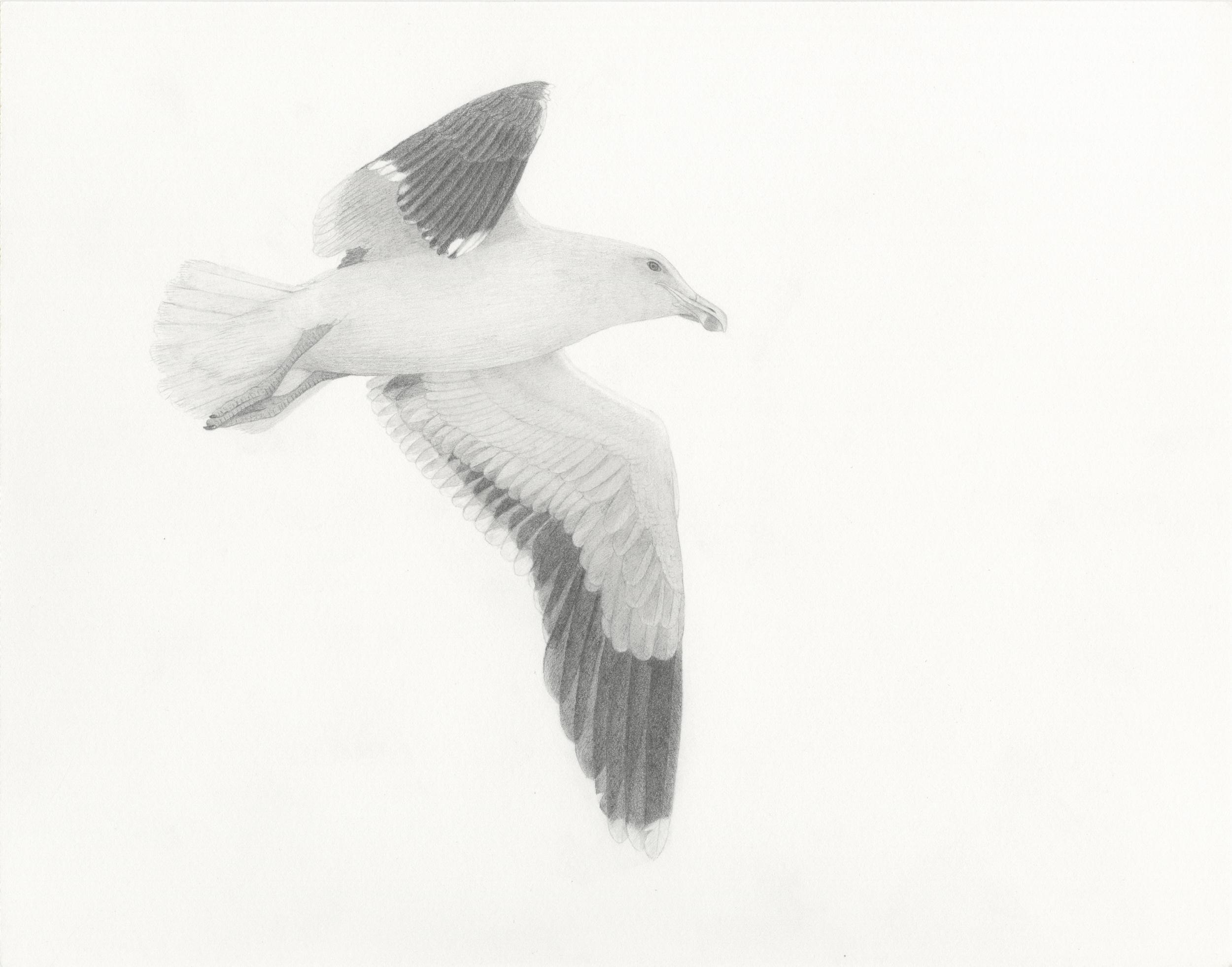 gull use copy.jpg