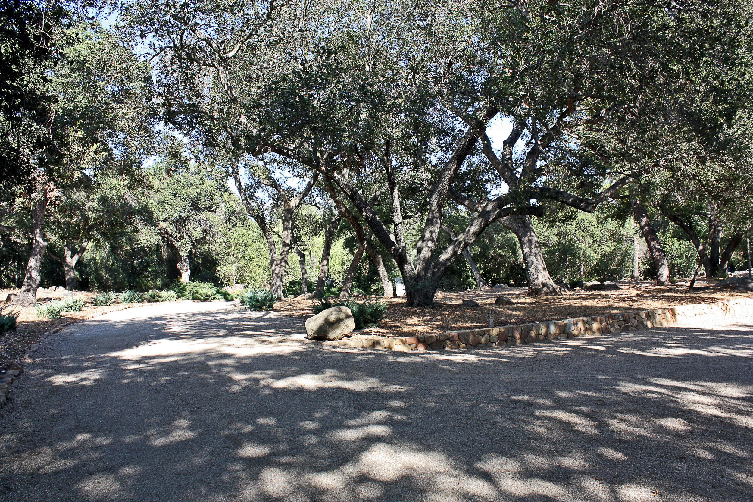 woods24a.jpg