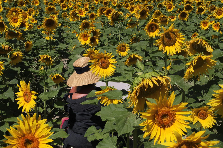 Malen im Sonnenblumenfeld Provence kreativurlaub.com