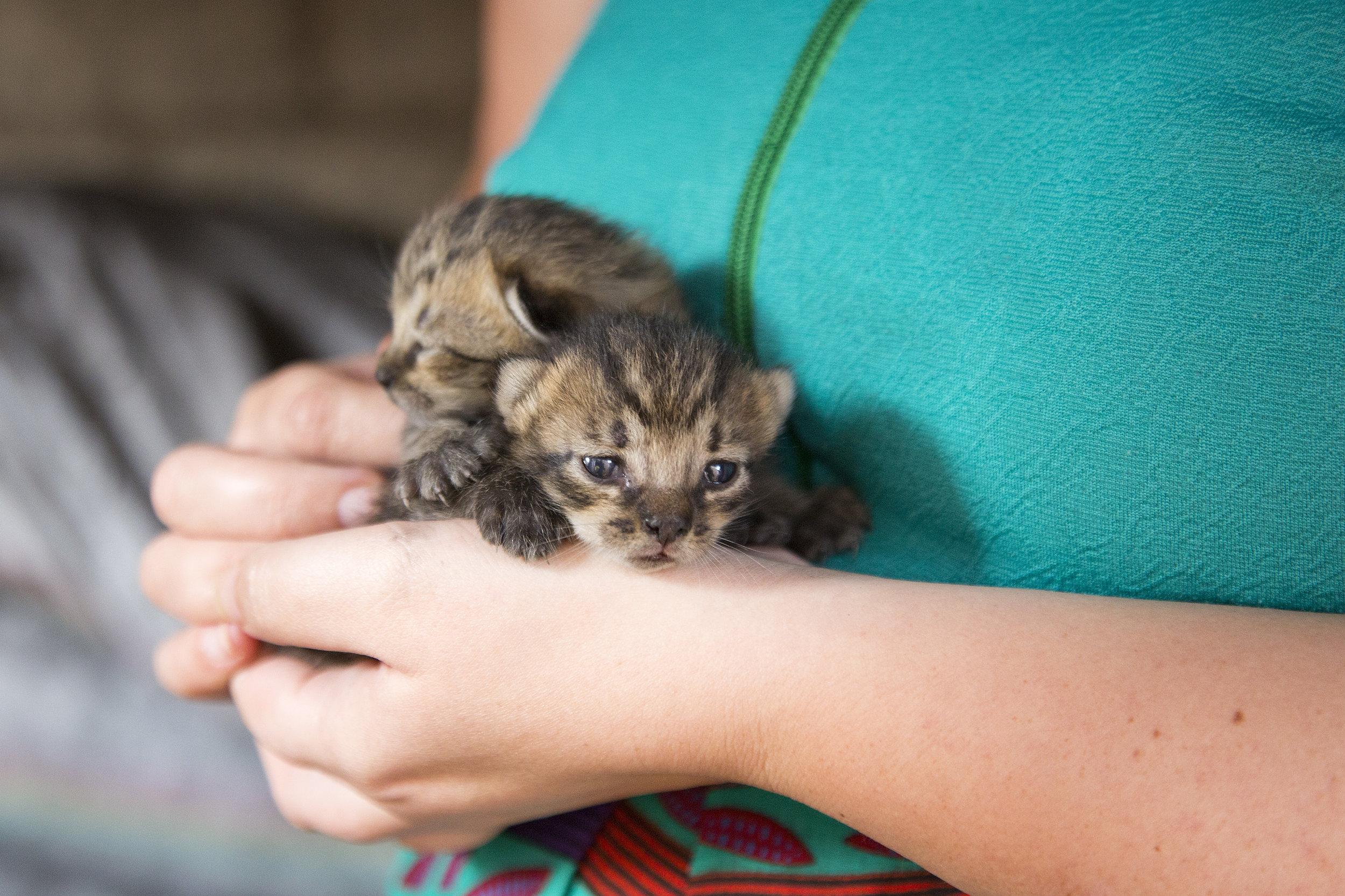 Not-yet-named kittens from Daisy