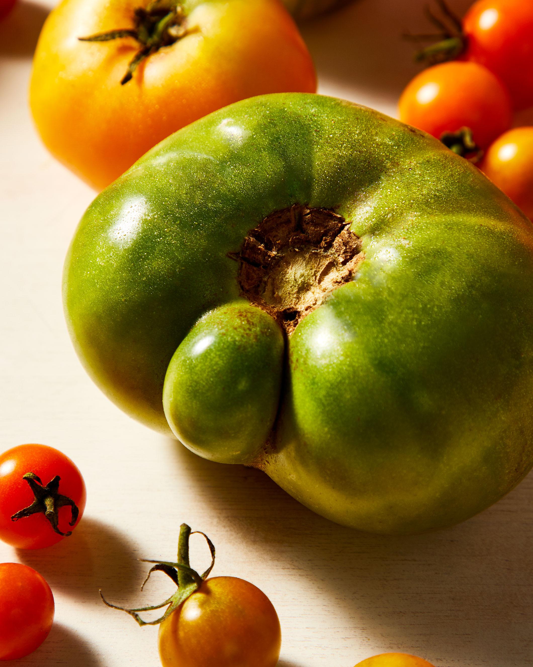 Gallete_Tomato_Green.jpg