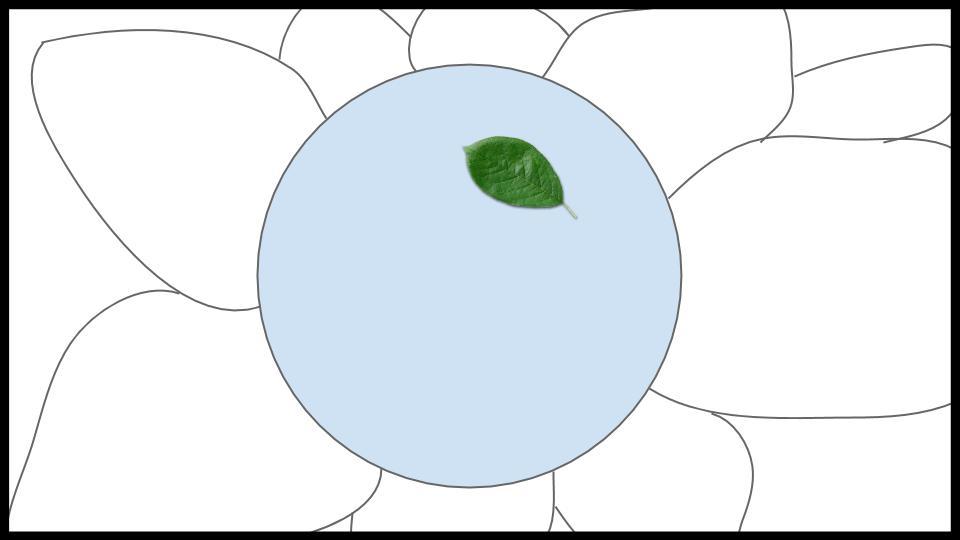 Bromeliad Ecosystem Game Idea (4).jpg