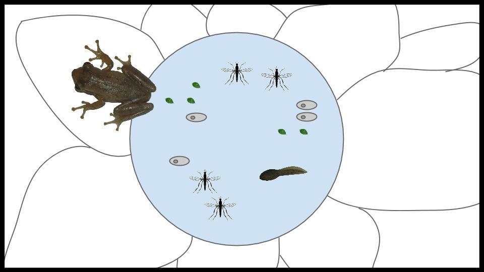 Bromeliad Ecosystem Game Idea (23).jpg