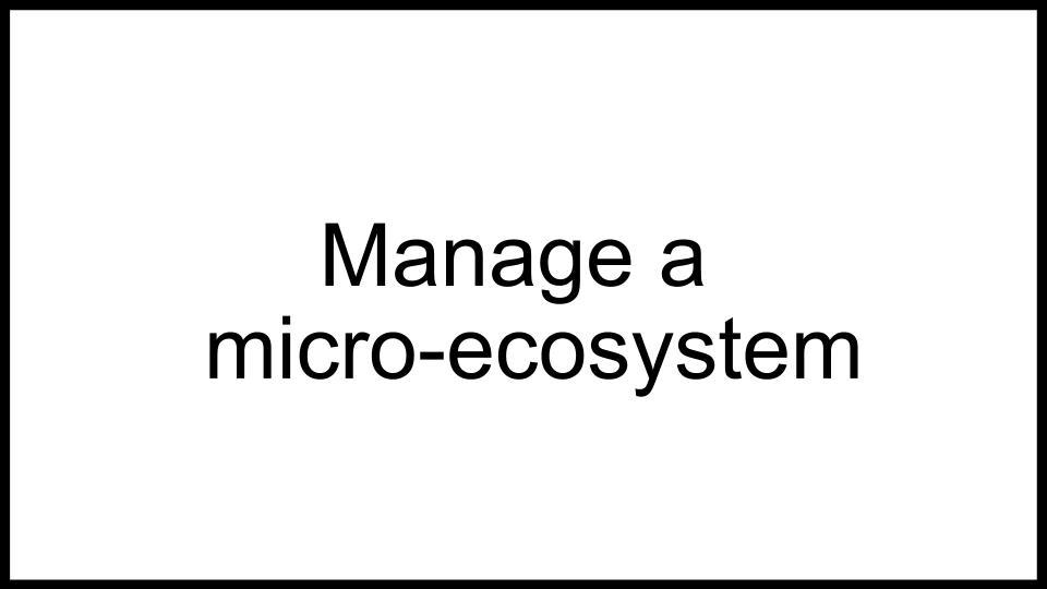 Bromeliad Ecosystem Game Idea (28).jpg
