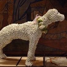 floral+dog+preston+bailey.jpg