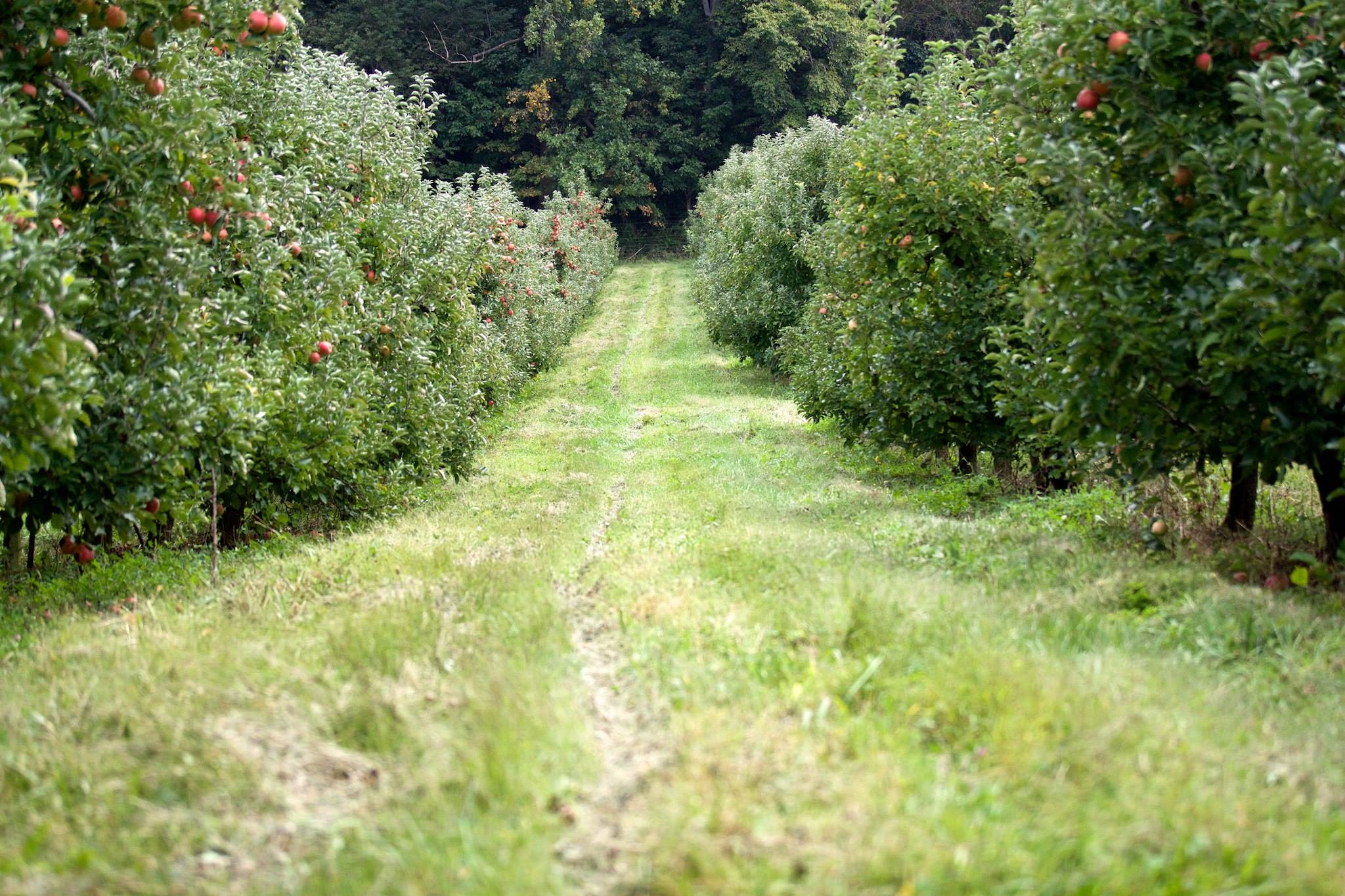 The beautiful orchard.