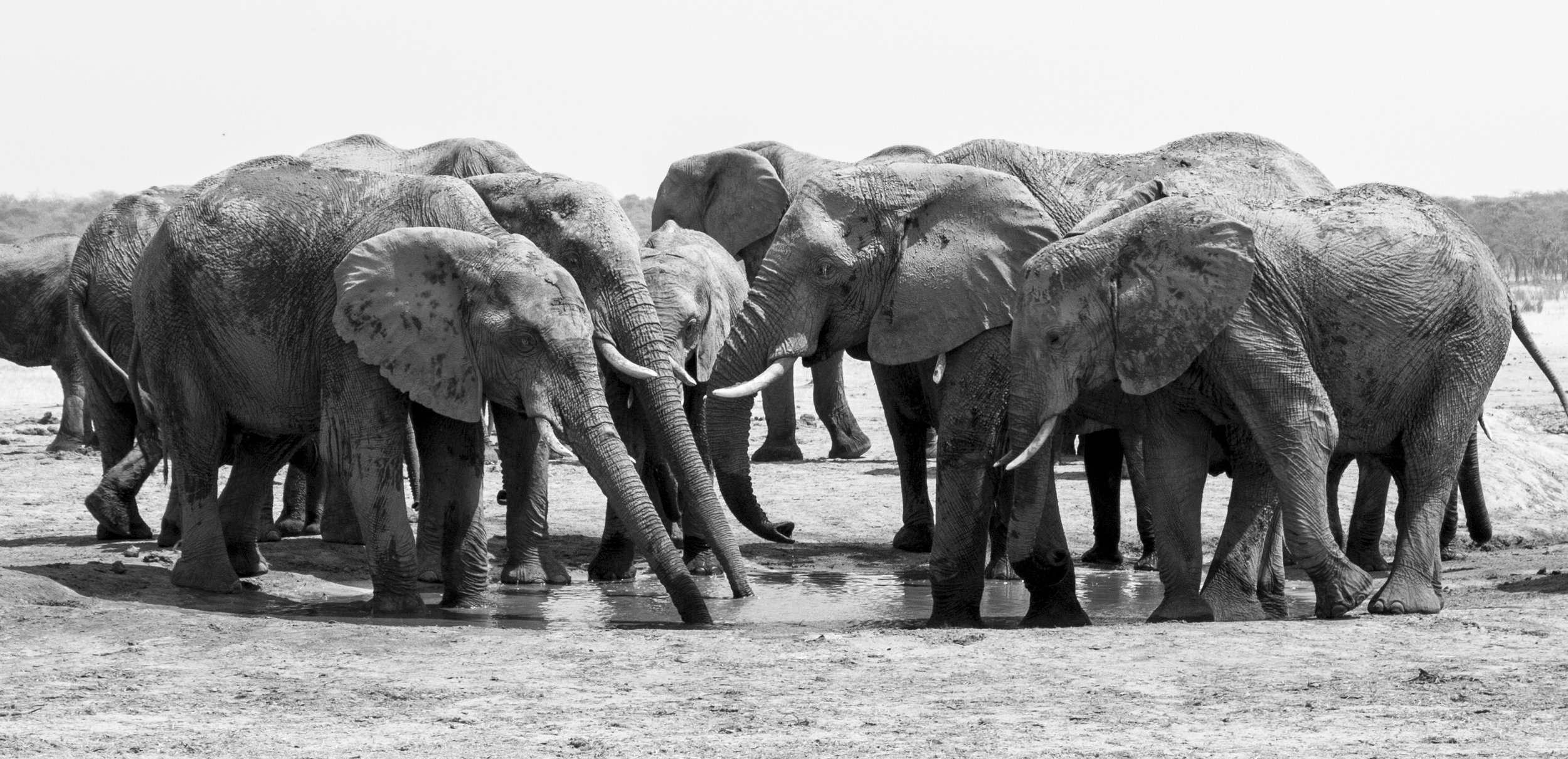 An elephant family at a Hwange watering hole. IMAGE: Shannon Elizabeth