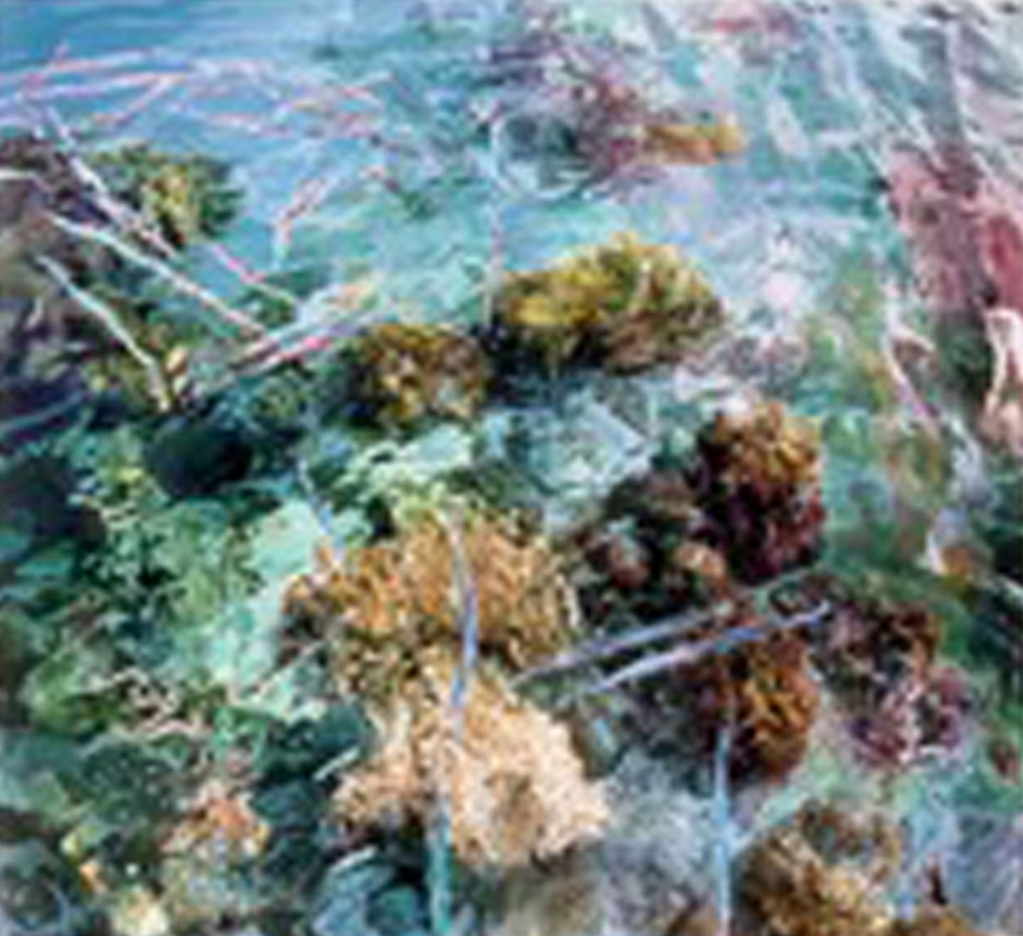 """""""Coral view, Turtle Island"""""""